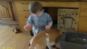 Deze jongen wil zijn hond echt wel voederen. Maar wat gebeurt, kan ons lachen ni