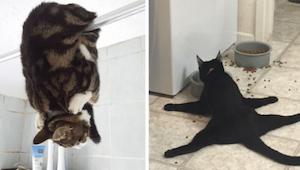 Deze 12 katten vergaten blijkbaar dat ze een kat zijn ... En we kunnen niet stop