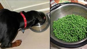 9 gezonde producten die je niet aan je hond geeft maar wel zou moeten!