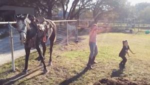 De meisjes filmden hoe ze dansten naast het paard. Als ze achteraf de video beke