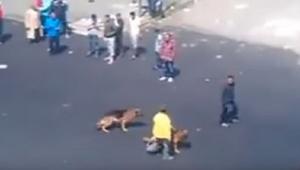 De man gooide een baksteen naar de honden - en toen... Karma!