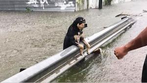 Tijdens een krachtige storm lieten de eigenaren hun hond voor dood achter. Deze