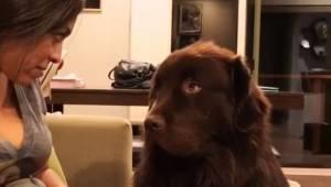 Een vrouw verontschuldigt zich bij haar hond. Zijn reactie is ongelofelijk!