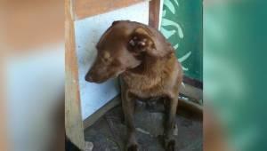 Na twee ellendige jaren in het asiel rook deze hond plots een bekende geur. Haar