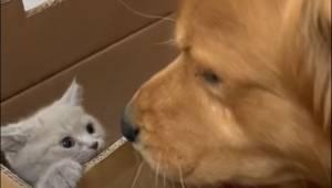 Pewnego dnia właściciele tego psa przynieśli do domu kota. Pierwsze spotkanie zw